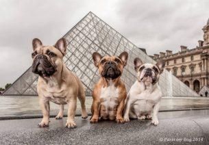 Animalbox et Doggybox fusionne
