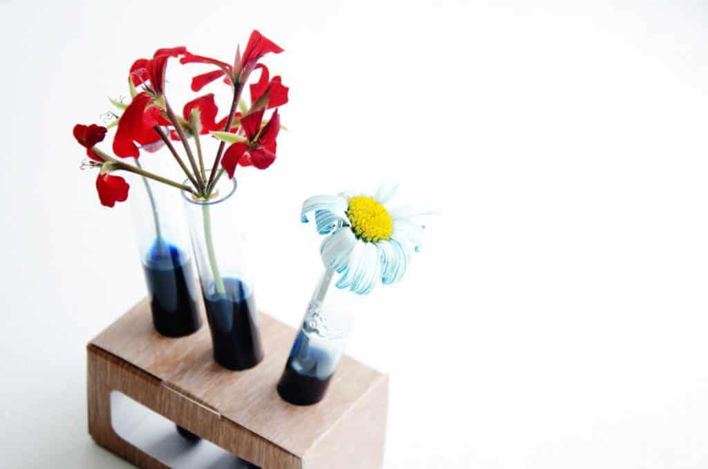 Scientibox de juin - L'évolution de mes plantes !