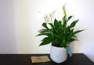box fleurs et jardinage livraison de fleurs en abonnement mensuel. Black Bedroom Furniture Sets. Home Design Ideas