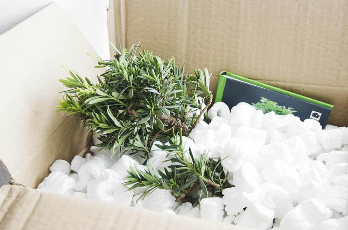 Bonsai Box